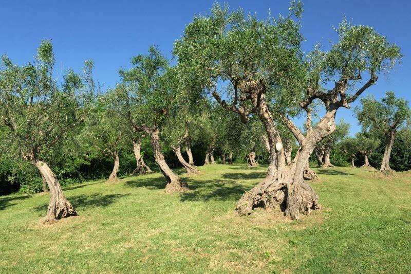 Fano Adriatic-Coast Adriatic-Coast-&-The-Marches Villa Emilia gallery 003